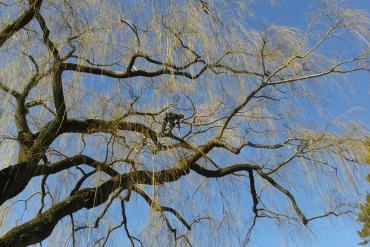 Centre Parcs Tree Climber